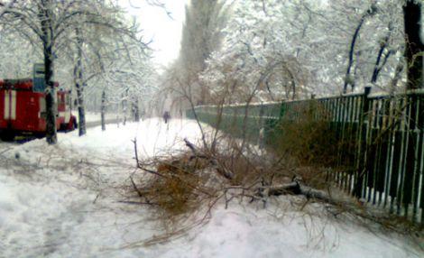 У центрі Києва на людину впало дерево. ФОТО